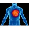 Bizonyos szénhidrátok túlzott fogyasztása szívbetegséget okozhat