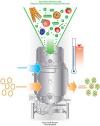 Az egyedülálló életelixír, az enzim élesztősejt